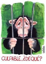 LA GENTE MALTRATA A LOS ANIMALES DEL ZOO